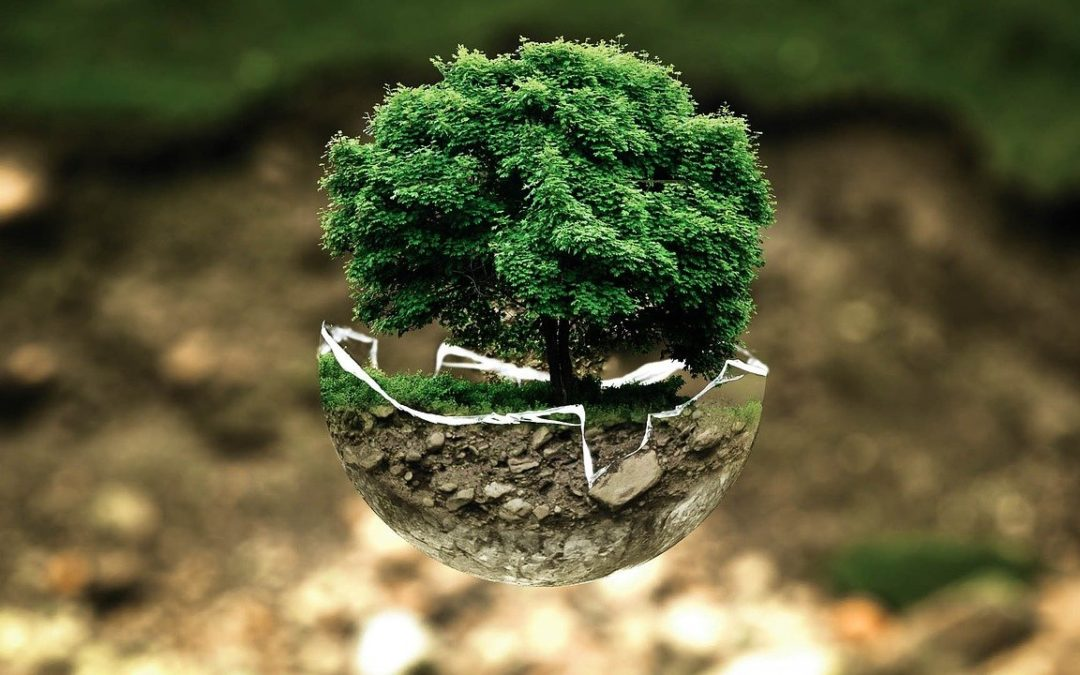 Dans une démarche eco-responsable…