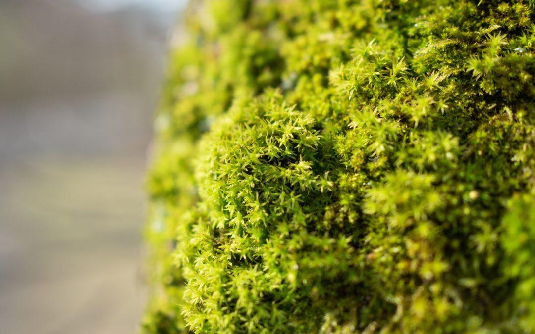 Votre toiture végétalisée avec mon extension bois