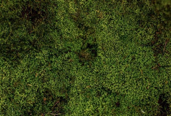 mousse végétale mon extension bois